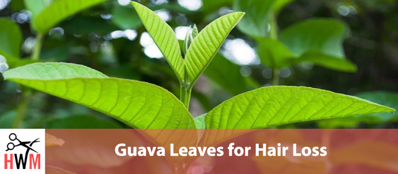 Guava Leaves for Hair Loss: Everything You Need to Know